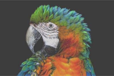 Деталь попугая на ЖК-экране с боковой подсветкой