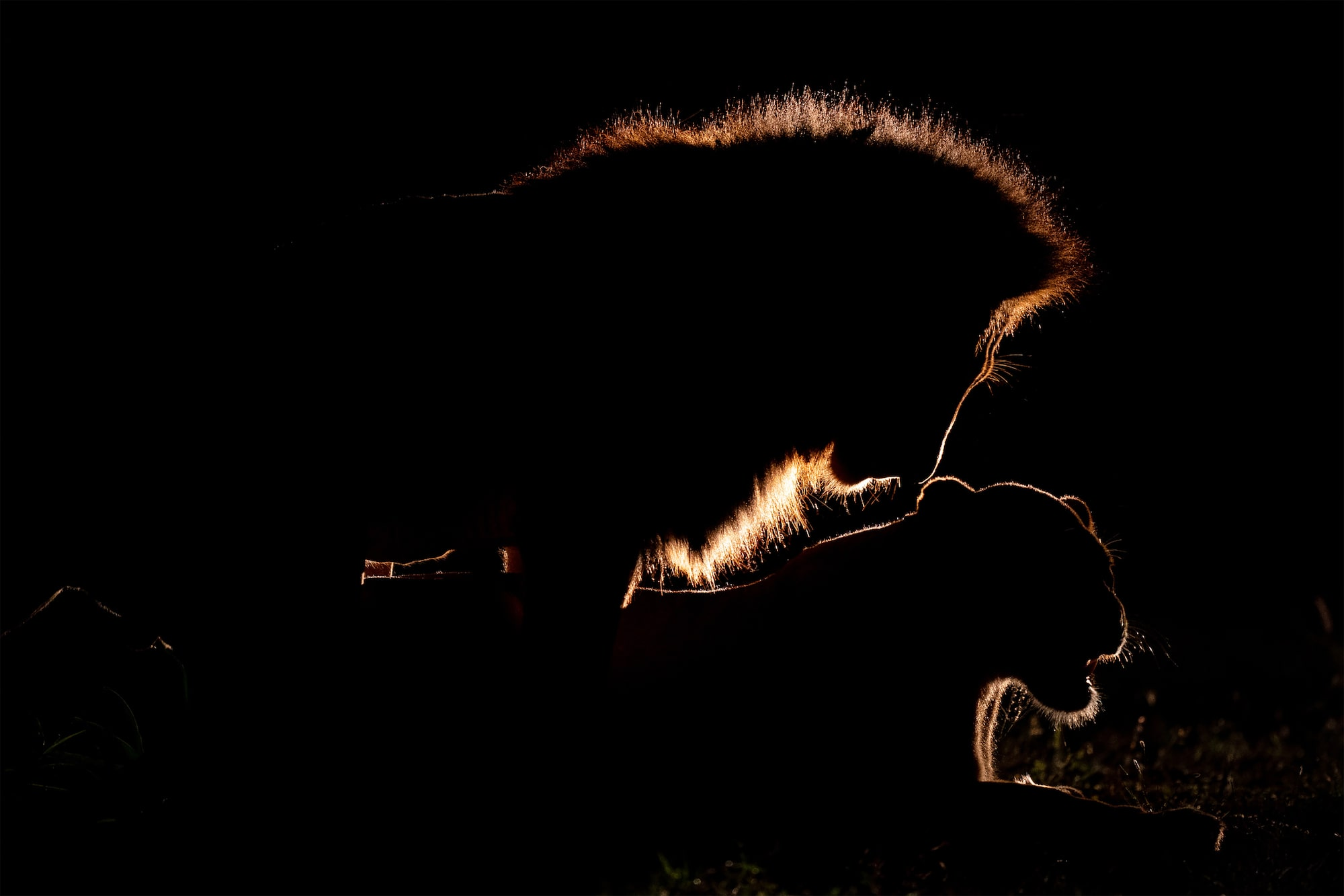 andreas-hemb-sony-alpha-9-a-silhouette-of-2-lions