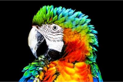 Детализация Parrot на OLED-экране Sony с функцией Pixel Contrast Booster